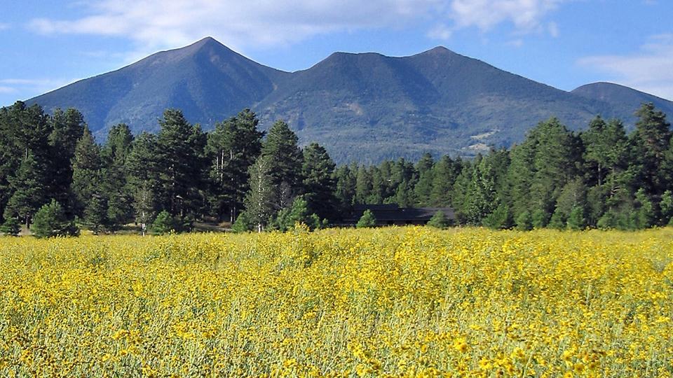 AZ Flagstaff_Peaks and Sunflowers