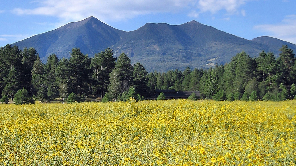 AZ Flagstaff_Peaks and Sunflowers